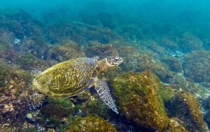 Destinasi Snorkeling Terbaik Selain Raja Ampat