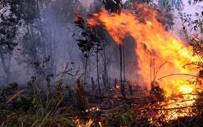 5.683 Ha Hutan dan Lahan Sulut Terbakar