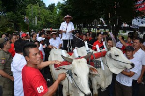 Gubernur Sulawesi Utara Utara Olly Dondokambey SE dan Wakil Gubernur Sulut Drs Steven Kandouw membuktikan diri bahwa kedua pemimpin baru Sulut ini sebagai anak petani. Buktinya saat menuju kantor Gubernur, Rabu (17/02).