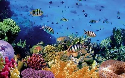 Akhirnya, Bunaken Masuk Destinasi Wisata di Indonesia