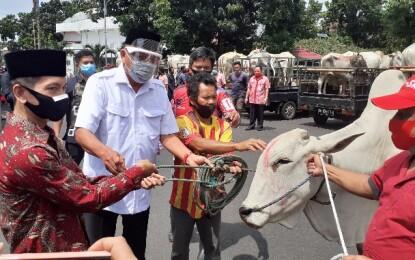 Gubernur Olly Serahkan 210 Sapi Qurban untuk Umat Muslim Sulut