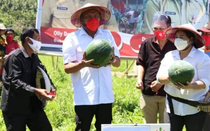 Gubernur Olly Asuransikan Lahan Pertanian dan Peternakan Sapi di Minsel